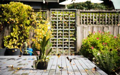 Skab en oase i haven